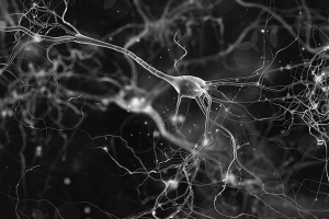 Cognitive function and the microbiota blog - ProVen Probiotics