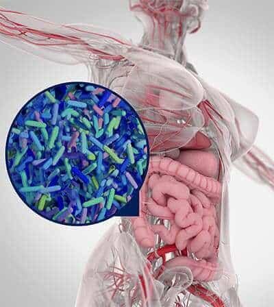 Microbial Colonisation of the Gut - ProVen Probiotics