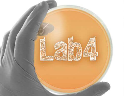 Choosing the right probiotic - Lab4