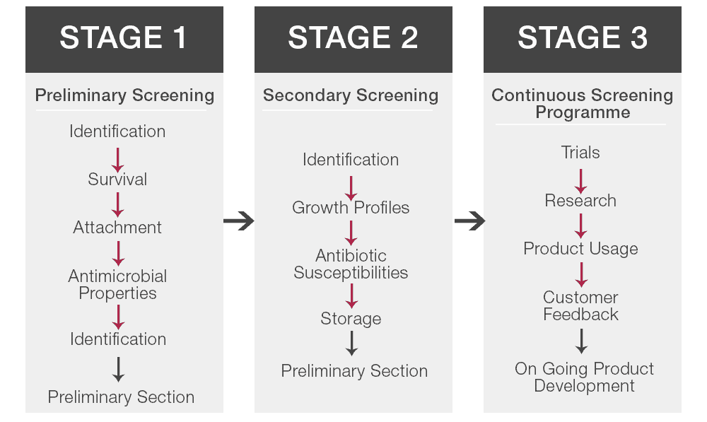 Lab4 Stages