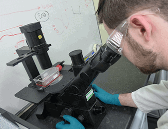 Man looking into microscope and undertaking probiotic research