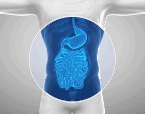 Category Menu Gastro Intestinal Health
