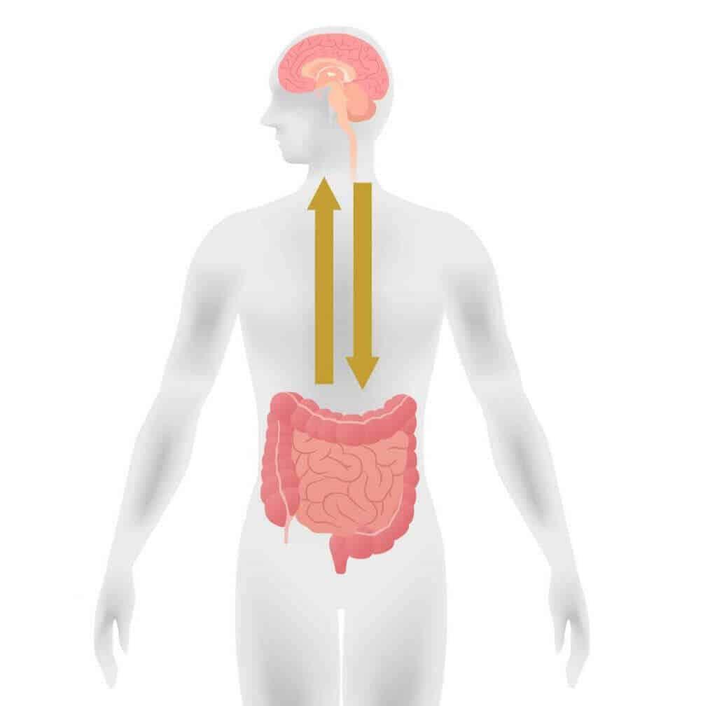 The relationship between the gut-brain