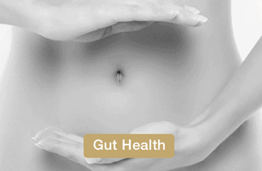 Gut health aided with the use of ProVen Probiotics