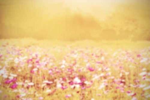 Flowers causing hayfever, an allergic condition | ProVen Probiotics