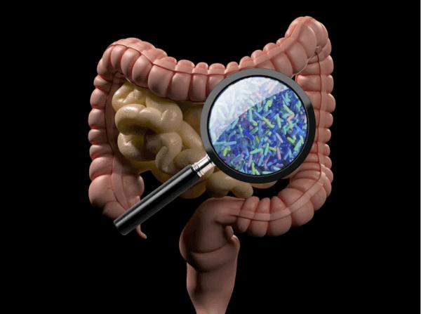 A close look at our friendly gut bacteria - ProVen Probiotics