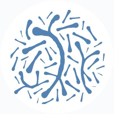 Bifidobacterium anamalis - good bacteria in your gut | ProVen Probiotics