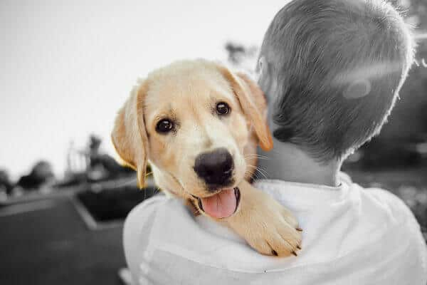 Today is National Love Your Pet Day, which focuses on pampering our pets and acknowledging the special place they hold in our lives
