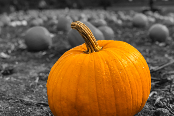 Pumpkin gut health benefits and facts - ProVen Probiotics
